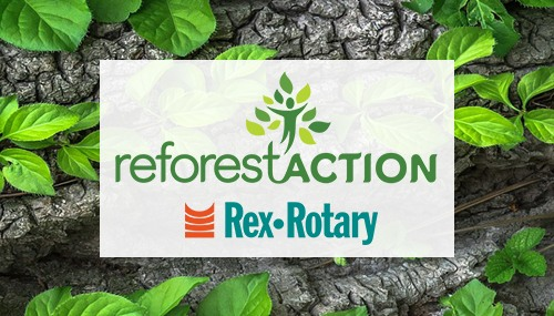 article blog deforestaction