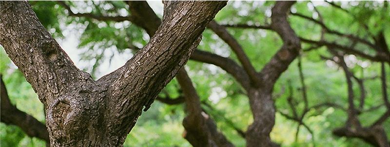 développement durable arbre